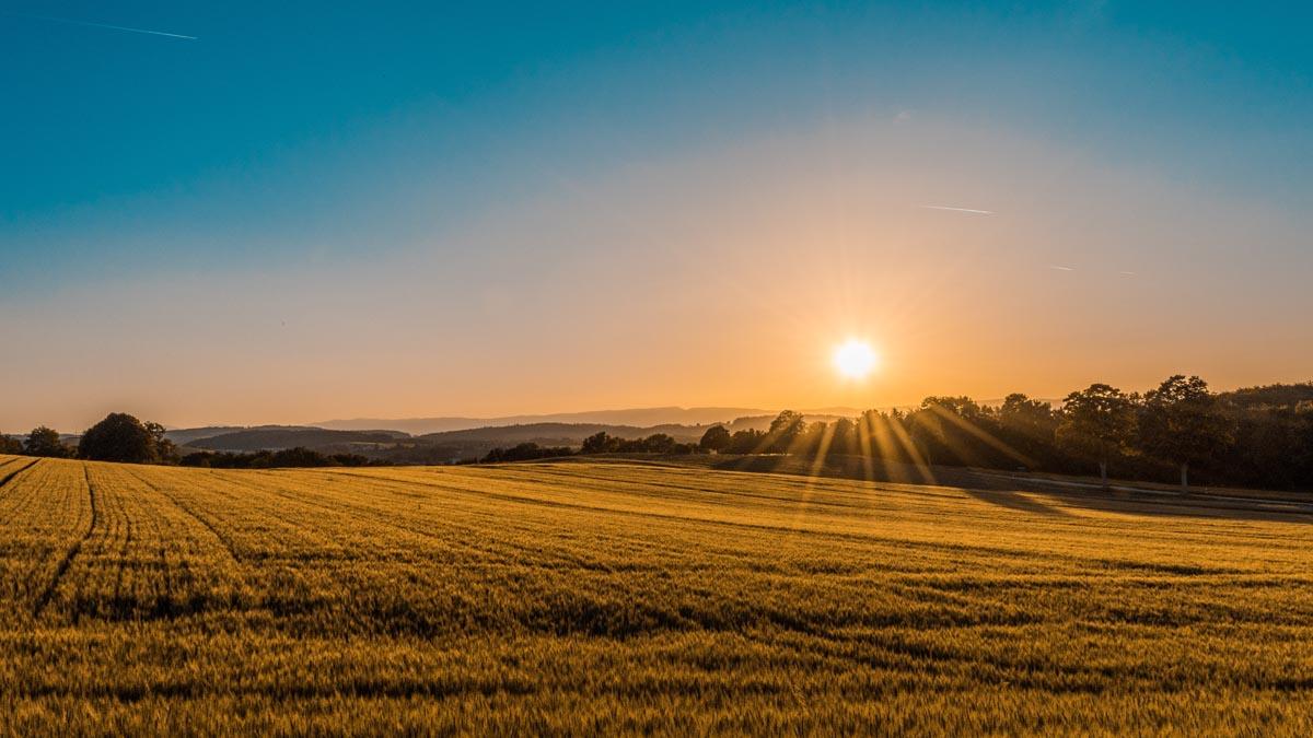 Soluppgång över ett gult fält