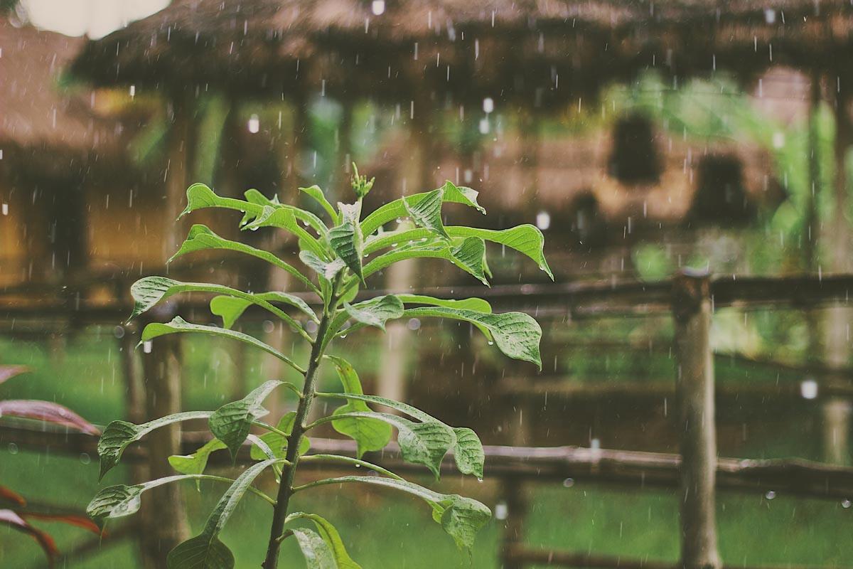 Regn i en grön lummig trädgård